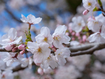春なんです